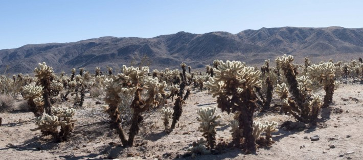 2013-02-Road_Trip-Joshua_Tree10