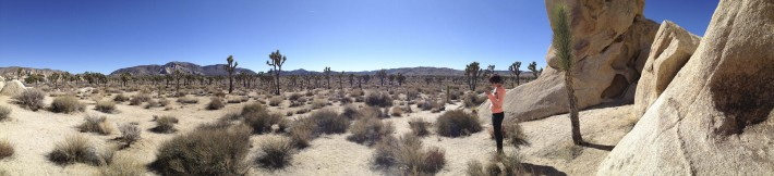 2013-02-Road_Trip-Joshua_Tree8