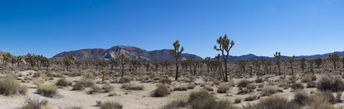 2013-02-Road_Trip-Joshua_Tree9